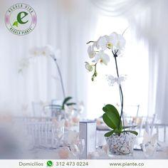 La Orquídea de color blanco es la elección perfecta para los centro de mesa en una boda. Puedes organizar una fiesta temática donde estas sean el centro de atracción de la decoración. Haz tu pedido en Bogotá al 312 473 0224 #RegalaVidaRegalaPiante #DecoraciónPiante #IdeasDeRegalos #Flores #Únicas #Orquídeas #Decoración #Estilo #Elegancia #Colombia #Bogotá #HazTuPedido