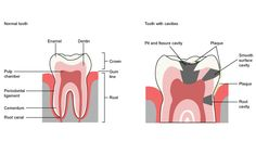Call: 0091484 - 2357299, 0091-484-235-6256 for any dental care or low cost dental treatment in Kerala