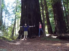 """The name """"Avenue of the Giants"""" perfectly describes these beauties. The Redwoods are a must see--truly one of the most magnificent living things on this Earth."""