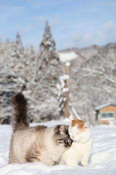 Любовь мороза не боится!
