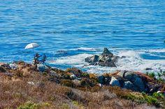Big Sur, California #colorphotography #photography #bigsur #california #ocean #paitings #fineart Fotografia pode ser um bom presente de Natal. Cópias em papel de algodão Fine Art de diversos tamanhos. Acesse www.thierrryrios.com #calocals - posted by By Rios Fotografias https://www.instagram.com/byriosfotografias - See more of Big Sur, CA at http://bigsurlocals.com