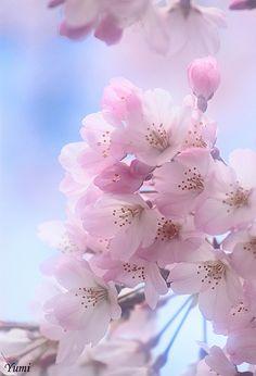 bloom softly