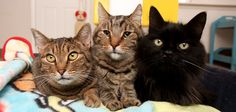 Best Friends Animal Society: Cat Resources