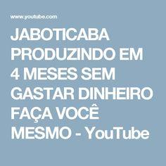 JABOTICABA PRODUZINDO EM 4 MESES SEM GASTAR DINHEIRO FAÇA VOCÊ MESMO - YouTube