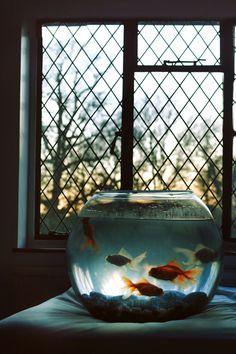 Through the fishbowl...