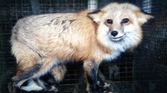 Petitioning Nordstrom, Blake Nordstom  Nordstrom: Say No to Cruelty, Stop Selling Fur