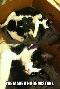 Funny pictures about Mother Cat Realization. Oh, and cool pics about Mother Cat Realization. Also, Mother Cat Realization photos. Funny Animal Memes, Cute Funny Animals, Funny Cute, Cute Cats, Hilarious Memes, Videos Funny, Funniest Animals, Pet Videos, Cat Fun