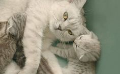 F5 - Bichos - Fotógrafa especializada em gatinhos dá dicas de como retratá-los - 22/05/2012