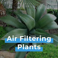 Air Filtering Plants, Houseplants, Green, Indoor House Plants, Interior Plants