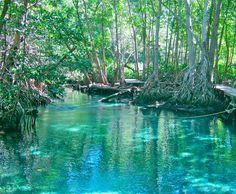 Freshwater spring in Celestun, Mexico