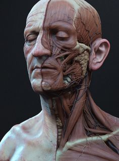 Ecorche Color by Adam Skutt | Portrait | 3D | CGSociety
