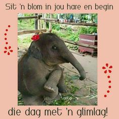 Verona, Animals And Pets, Cute Animals, Morning Pictures, Morning Pics, Good Morning Wishes, Haha, Elephant, Inspirational Quotes