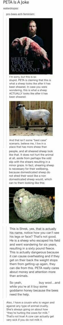 I grew up around a sheep too, and that's pretty much what a sheep looks like sheared. Just sayin'