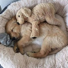 We love Dogs Cute Baby Dogs, Cute Little Puppies, Cute Dogs And Puppies, Baby Puppies, Cute Little Animals, Cute Funny Animals, I Love Dogs, Doggies, Cute Animal Photos