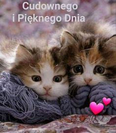Puppies And Kitties, Cute Cats And Kittens, I Love Cats, Crazy Cats, Cool Cats, Kittens Cutest, Dogs, Cute Cartoon Animals, Cute Baby Animals