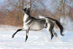 Resultado de imagen para imagenes de caballos akhal teke
