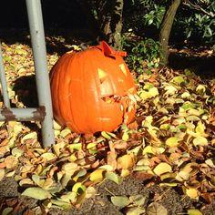 "Northwest University Student Josh Payne enjoying the holiday season as he posts this picture with caption ""Haha zombie pumpkin #northwestu #pumpkins #fall"""