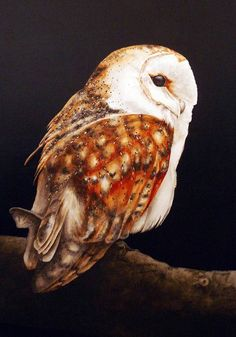 Barn Owl - watercolour print - portrait style This is a fine art print from my original watercolour painting. It is printed onto Somerset Enhanced