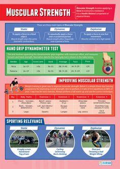 Muscular Strength Poster