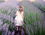 lavender - so enchanting Lavender Blue, Lavender Fields, Holiday Time, Garden Planning, Enchanted, Purple, Soul Healing, Art Children, Lilacs