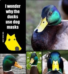 You will never look at them the same way again.