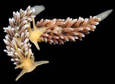Criaturas de las profundidades del mar captadas por Alexander Semenov | FURIAMAG | Visibilizamos - Inspiramos - Conectamos