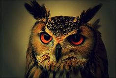 I think owls are awesome