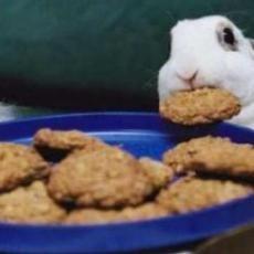 ° Pumpkin Plus ° Pet Bunny Rabbit Treats