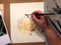 Watercolor DVD - Video - How to paint a white rose by Doris Joa