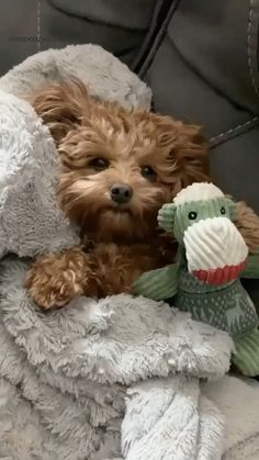 Dogs & puppies Super Cute Puppies, Baby Animals Super Cute, Cute Little Puppies, Cute Dogs And Puppies, Cute Little Animals, Cute Funny Animals, Baby Dogs, Cute Cats, Cute Babies