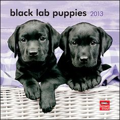 Black Lab Puppies Mini Wall Calendar: Very energetic, maybe a little clumsy but absolutely adorable, Black Labrador Retriever puppies play, play, and play until they—or more likely you—are worn out.  $7.99  http://calendars.com/Black-Labs/Black-Lab-Puppies-2013-Mini-Wall-Calendar/prod201300004476/?categoryId=cat10087=cat10087#