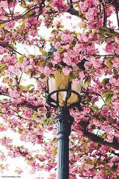 Le Printemps à Paris. Springtime in Paris.