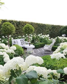 My garden one month ago. Is it me or does the summer months pass much faster than the winter months. : My garden one month ago. Is it me or does the summer months pass much faster than the winter months. Topiary Garden, Hydrangea Garden, Garden Netting, Diy Garden, Garden Pots, Moon Garden, Dream Garden, Back Gardens, Outdoor Gardens