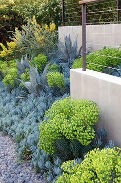 Plantations succulentes dans les tons jaunes/vert/bleus - Wonderland Park Residence - Fiore Landscape Design