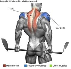TRAPS -  BARBELL SHRUGS