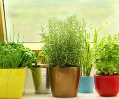 There is no better way to know what you are putting into your #body than #growing your own food. Grab some #small #planters and make your own #indoor #herb #garden!