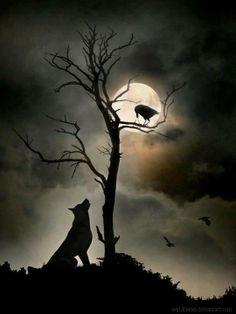 .full moon dog watching a crow in the winter tree