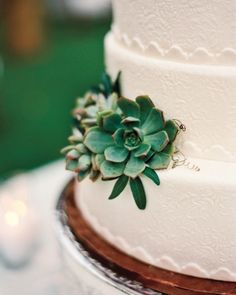Love the detail in the fondant and that these look like succulents