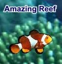 """Mr. Young's Bouncy """"A"""" - Ocean Activities & SmartBoard Lessons"""