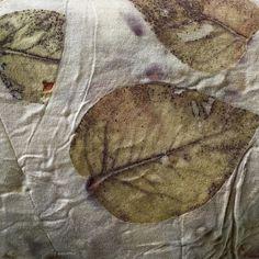 India Flint: eucalyptus leaves India Flint, Eucalyptus Leaves, Textile Artists, New Love, Bloom, Textiles, Instagram Posts, Fabric, Prints
