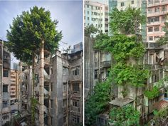 Bomen vs beton in Hong Kong - Hoe de natuur het wint op de beschaving Top Photos, Photos Du, Pictures, Abandoned Ships, Abandoned Places, Abandoned Houses, Angkor, Monuments, Hong Kong