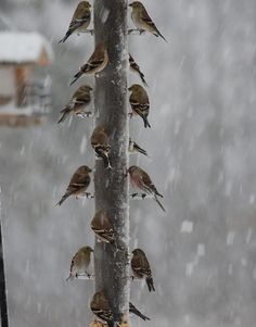 winter bird feeder--don't forget to feed our winter birds and squirrels..