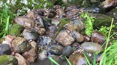 This ecosystem waterfall and small pond bring birds, frogs, dragonflies and joy to this homeowner. We love to build small and large ponds, waterfalls, fountains, and swim ponds in Northern Michigan. Waterpaw has been in the waterfeature business as a small boutique company since 1996. One of the Top Frogs in the business with awards from Aquascape Inc. and Houzz we are your go to waterfeature experts. Pond Waterfall, Small Waterfall, Pond Landscaping, Ponds Backyard, Tropical Landscaping, Pond Design, Garden Design, Pond Maintenance, Bamboo Garden