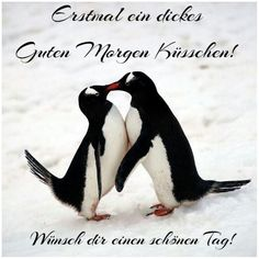 a picture for & # s heart & # s lovely day.jpg & # - One of 1007 files in the category & # cute animal pictures & # on FUNPOT. Good Morning Funny, Morning Humor, Baby Animals, Cute Animals, First Day School, Twin Souls, Finding Neverland, Penguin S, Cute Animal Pictures