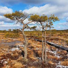 Torronsuon kansallispuisto.