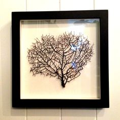 Framed Sea Fan Small 3 by Harolds Curiousity Cabinet. $100