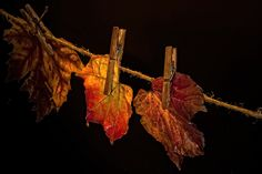 To dry by Rucsandra Calin on 500px