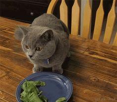【GIFアニメ】 素早く身を隠す猫の技が瞬間移動レベルwww