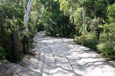 Fraser Island sand tracks