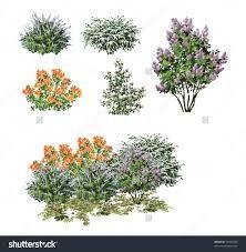 Image result for shrub